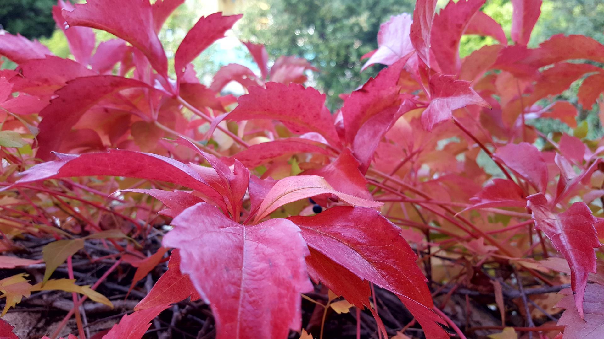 Couleur d' automne